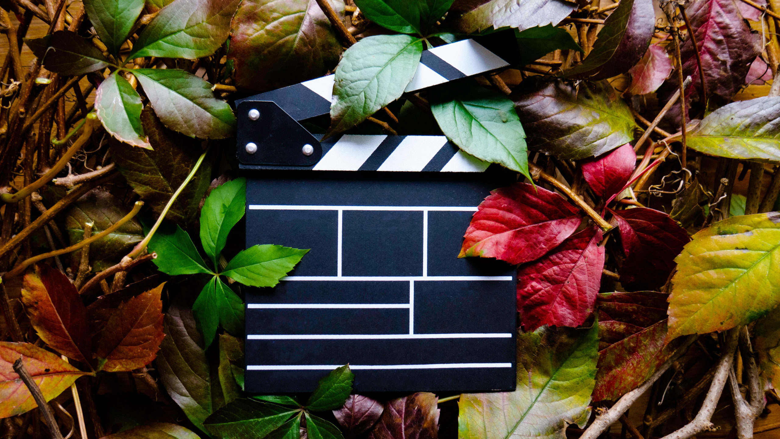 Empty wooden movie clapboard in frame of colorful autumn leaves. Nature concept. Top view. Ecological production, a film about environmental protection.